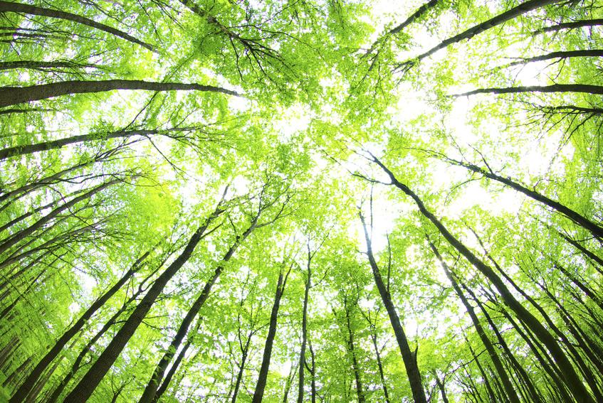 Innovazione e rispetto dell'ambiente grazie a soluzioni green